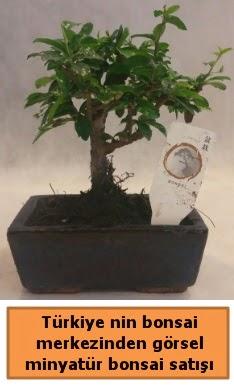 Japon ağacı bonsai satışı ithal görsel  çiçek siparişi sitesi