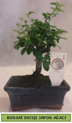 Minyatür bonsai ağacı satışı  Kocaeli internetten çiçek satışı