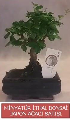 Küçük görsel bonsai japon ağacı bitkisi  Kocaeli çiçek siparişi vermek