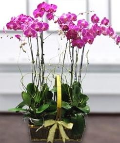 7 dallı mor lila orkide  Kocaeli çiçekçi mağazası