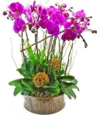 Ahşap kütükte lila mor orkide 8 li  14 şubat sevgililer günü çiçek