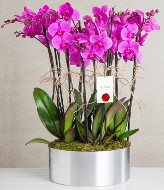11 dallı mor orkide metal vazoda  Kocaeli çiçekçi mağazası