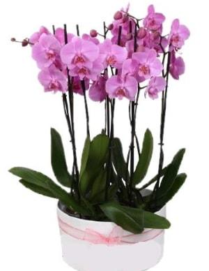 Beyaz seramik içerisinde 7 dallı mor orkide  Kocaeli çiçekçiler