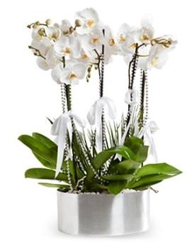 Beş dallı metal saksıda beyaz orkide  çiçek siparişi sitesi