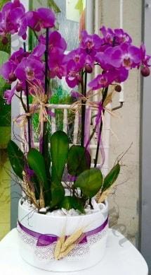 Seramik vazoda 4 dallı mor lila orkide  Kocaeli çiçek servisi , çiçekçi adresleri
