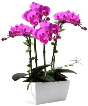 Seramik vazo içerisinde 4 dallı mor orkide  Kocaeli internetten çiçek siparişi