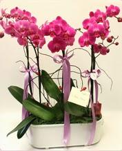 Beyaz seramik içerisinde 4 dallı orkide  Kocaeli online çiçek gönderme sipariş