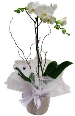 Tek dallı beyaz orkide  Kocaeli çiçek mağazası , çiçekçi adresleri