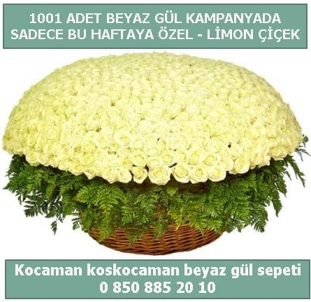 1001 adet beyaz gül sepeti özel kampanyada  Kocaeli çiçekçi mağazası