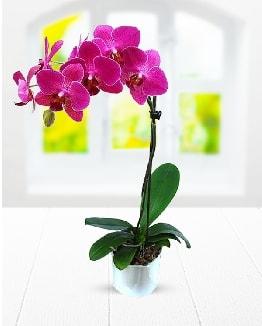 Tek dallı mor orkide  Kocaeli internetten çiçek siparişi