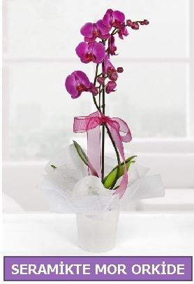 Seramik içerisinde birinci kalite tek dallı mor orkide  hediye çiçek yolla