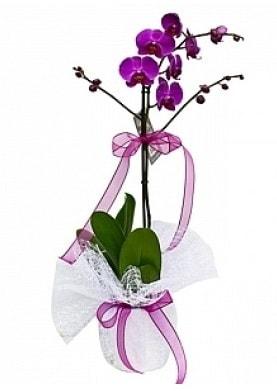 Tekli Mor Orkide  çiçek siparişi sitesi