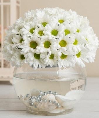 Fanusta beyaz Papatya  Kocaeli internetten çiçek siparişi