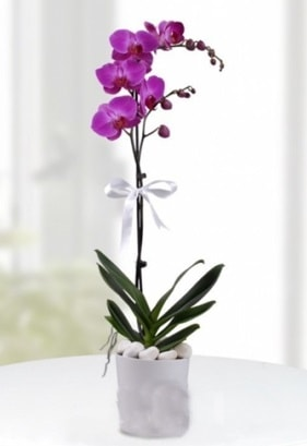 Tek dallı saksıda mor orkide çiçeği  Kocaeli anneler günü çiçek yolla