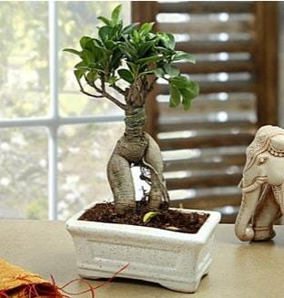 Marvellous Bonsai ginseng  Kocaeli uluslararası çiçek gönderme