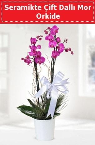 Seramikte Çift Dallı Mor Orkide  Kocaeli online çiçekçi , çiçek siparişi